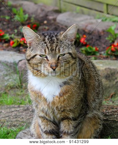 Image Of The Cat In The Garden