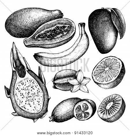 Vintage colorful tropical fruit illustration for vegetarian food.