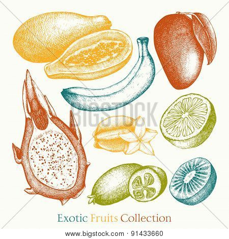 Vintage colorful tropical fruit illustration