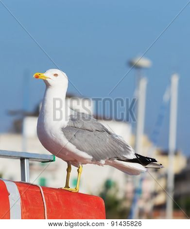 Close Up Of A Seagull Standing On A Boat