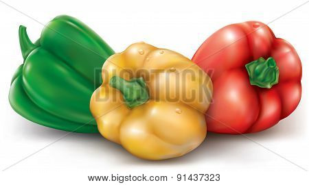 Colored Pepper Bell