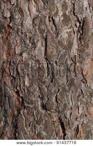 Pine Tree Bark Background