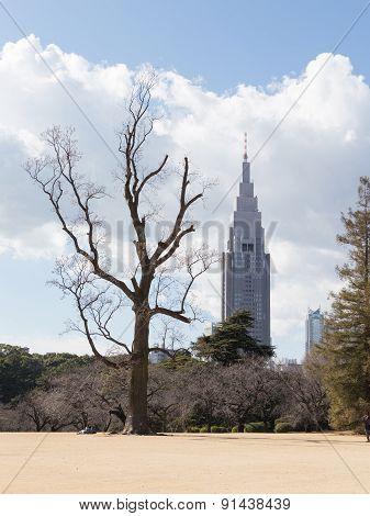 Winter Park In Tokyo