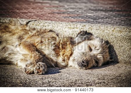 Close Up Of A Dog Sleeping In The Street In Hdr