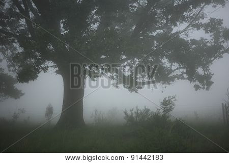 Misty Landscape View