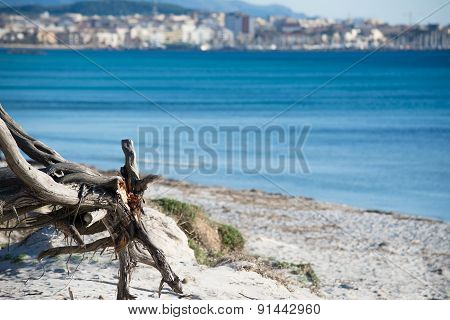 Close Up Of A Pine Trunk By The Shore In Maria Pia Beach