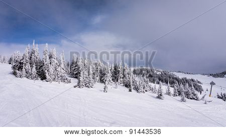 Snow Covered Trees in the High Alpine