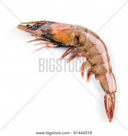 Delicious fresh shrimp