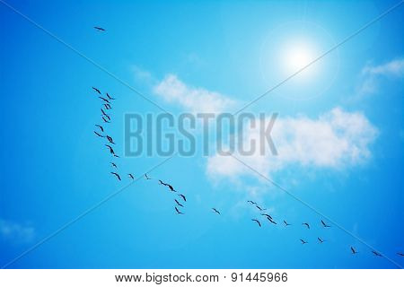 Flock Of Cormorants Flying Under The Sun