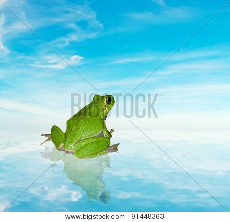 Frog On The Water Under A Blue Sky