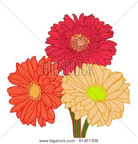 Bouquet of three colorful gerberas. Hand drawn illustration.