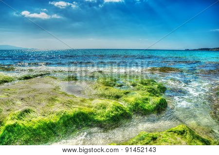 Green Seaweeds On The Rocks In Le Bombarde Beach In Hdr
