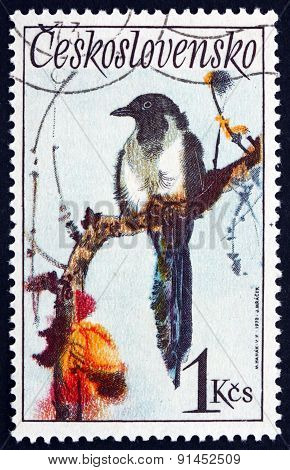 Postage Stamp Czechoslovakia 1972 Black-billed Magpie, Bird