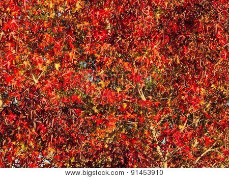 Full Autumn Color