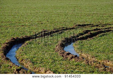 Car tracks in the waterlogged field