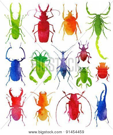 illustration of beetles on a wight background. watercolor vector illustration