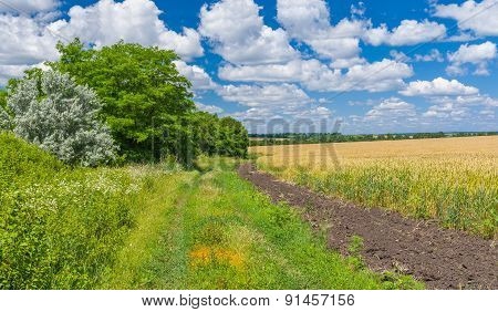 Ukrainian summer landscape with country road