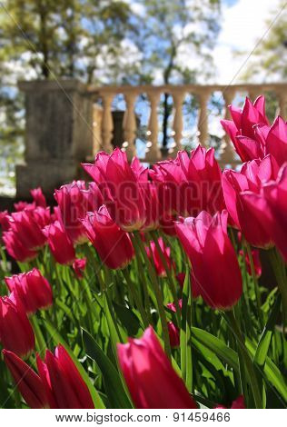 Red Tulips Near Garden Terrace