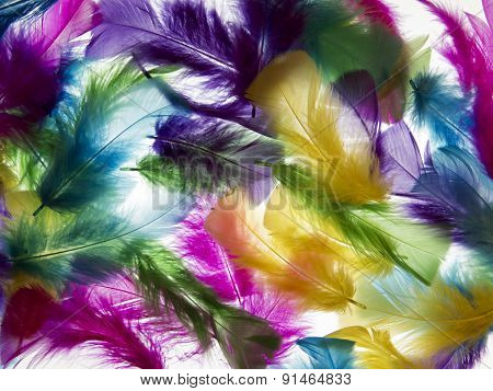 Light Background Of Feathers. Romantic, Delicate Texture