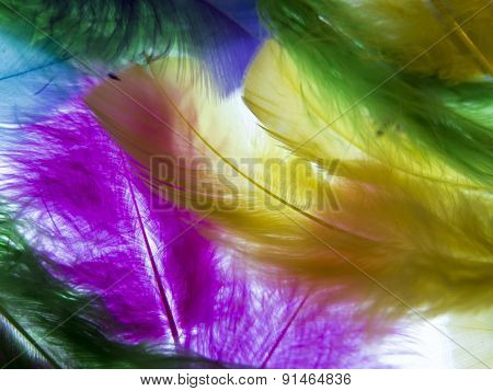 Delicate Feathers On A White Background. Semi-transparent Background. Ease