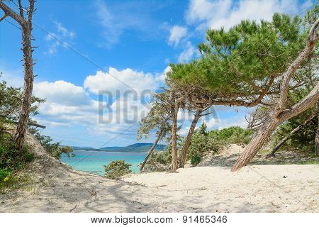 Pine Trees By The Shore In Maria Pia Beach