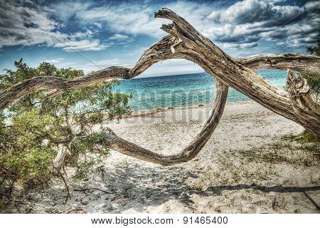 Pine Trunk In Maria Pia Beach In Hdr