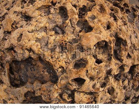 Coast Of Coquina Stone Close Up