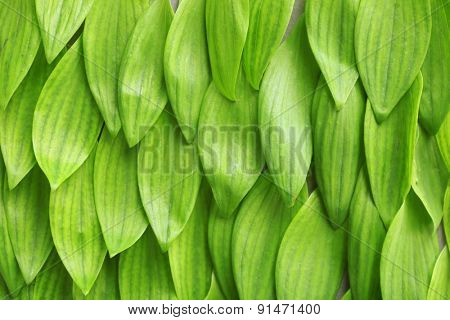 Background with fresh green leaves, close up