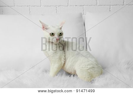 Beautiful white cat on sofa in room
