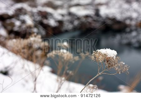 Branches with snow outdoors