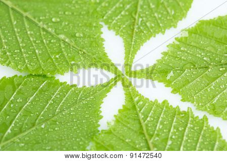 Beautiful green leaves with water drops close up