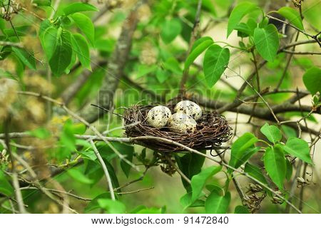 Wicker nest with eggs over green tree background