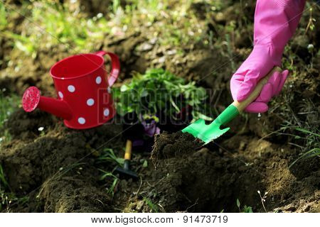 Female hands in pink gloves planting flowers, close-up