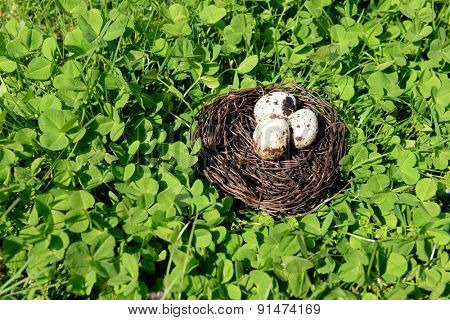 Nest with bird eggs over green bush background