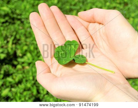 Hand holding four leaf clover on green nature background, close up