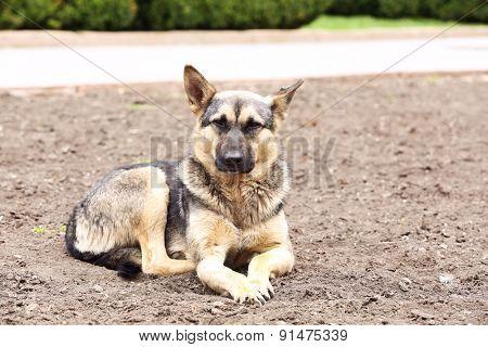 Stray dog, outdoors