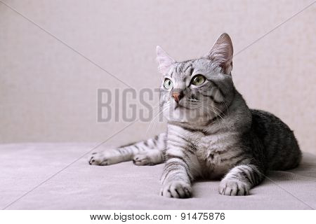 Beautiful cat on beige background
