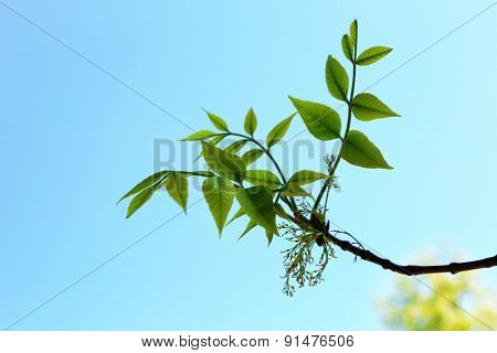 Beautiful green twig on blue sky background
