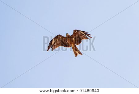 sharp gaze of an eagle in flight looking for its prey