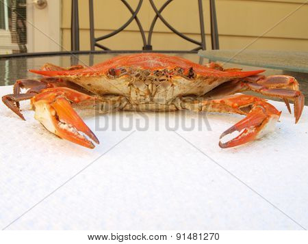 Cooked Blue Crab On Paper Towel