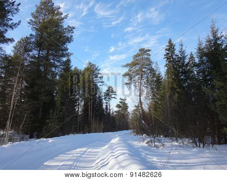 Road in the forest in winter sunny day