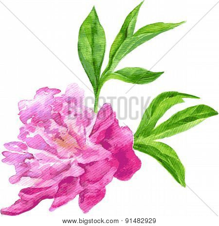 peony drawing by watercolor