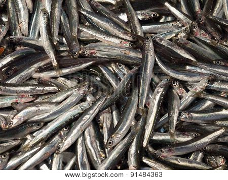 Sardines On Display In Fish Market.