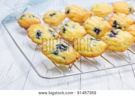 Madeleines With Blueberries On A Cooling Rack