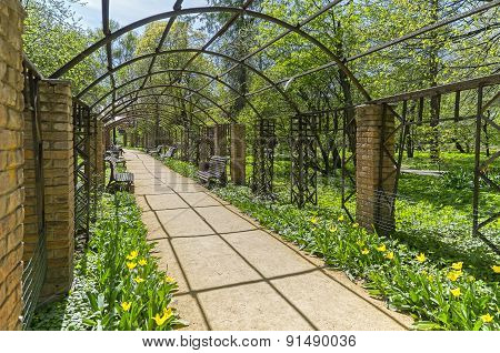 Pergola In The Park, The View From The Inside.