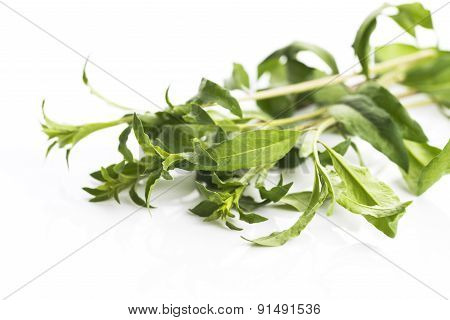 Goji Leaf Isolated On White Background