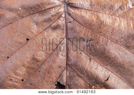 Close Up Natural Old Brown Leaf Background Texture