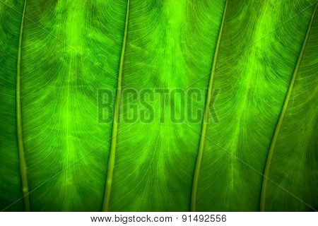 Close Up Natural Backlight Green Leaf Background Texture