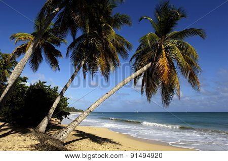 Martinique, Sainte Anne, Beach Of  Les Salines