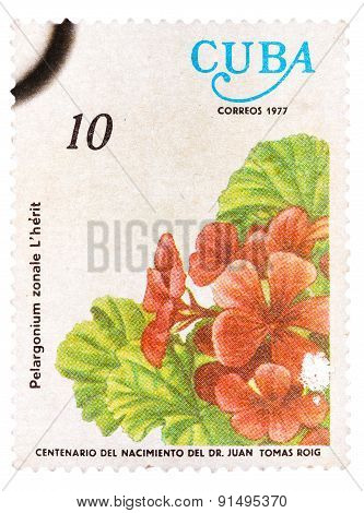 Stamp printed in Cuba, flower shows Pelargonium zonale